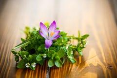 Groupe de fleurs avec des crocus Photographie stock libre de droits