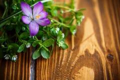 Groupe de fleurs avec des crocus Photo libre de droits
