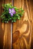 Groupe de fleurs avec des crocus Photos stock
