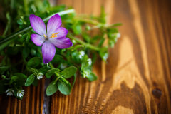 Groupe de fleurs avec des crocus Photographie stock