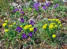 Groupe de fleurs colorées Photo libre de droits