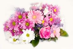 Groupe de fleurs de source Photographie stock