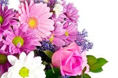 Groupe de fleurs de source Images stock