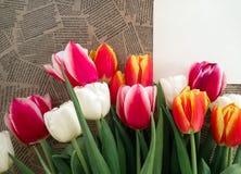 Groupe de fleurs de tulipes sur le fond de journal de vintage Image stock