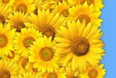 Groupe de fleurs jaunes Photos stock