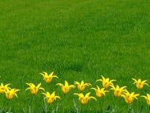 Groupe de fleurs jaunes photographie stock