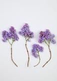 Groupe de fleurs lilas Photo stock