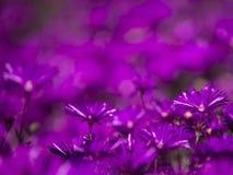 Groupe de fleurs pourprées Image stock