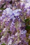 Groupe de fleurs pourprées closeup photo stock