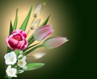 Groupe de fleurs de ressort sur le fond foncé photo libre de droits