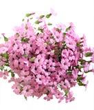 Groupe de fleurs roses de champ Images stock