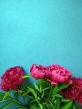 Groupe de fleurs roses de pivoine Image libre de droits