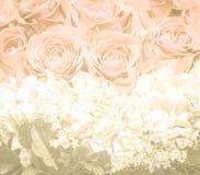 Groupe de fleurs rouges et blanches traitées dans le ton chaud Photo stock