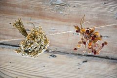 Groupe de fleurs sèches Image stock