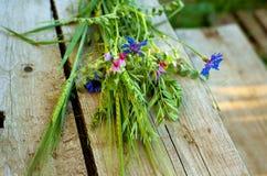 Groupe de fleurs sauvages et de céréales Photo stock