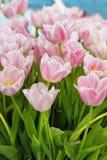 Groupe de fleurs de tulipe Image stock