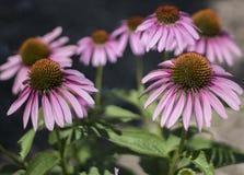 Groupe de Floweres Image stock