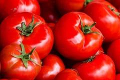 Groupe de fond frais de tomates. Tomates rouges mûres sur un marke Photographie stock libre de droits