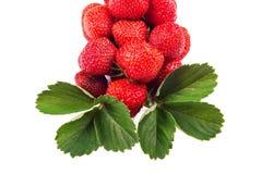 groupe de fraises avec des feuilles d'isolement sur le fond blanc images stock