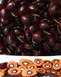 Groupe de fruit de paume avec la structure de graine Images libres de droits