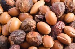 Groupe de fruits d'argan. Fin vers le haut Photos libres de droits