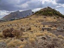Groupe de Gelada, gelada de Theropithecus, alimentations en parc national de montagnes de Simien en Ethiopie photographie stock libre de droits