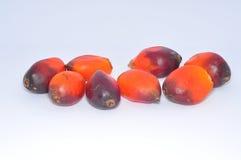 Groupe de graine de palmier à huile à l'arrière-plan blanc Images stock