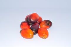 Groupe de graine de palmier à huile à l'arrière-plan blanc Photos libres de droits