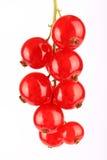 Groupe de groseilles rouges Photographie stock