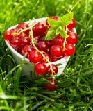 Groupe de groseilles rouges fraîches juteuses Photo stock