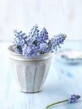 Groupe de jacinthes de raisin dans un vase Photos stock