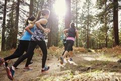 Groupe de jeunes femmes adultes courant dans une forêt, vue arrière Images stock