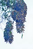 Groupe de jumeau de papillon de monarque Images libres de droits