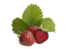 Groupe de la fraise sur le fond blanc avec des feuilles Image libre de droits