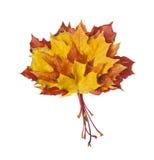 Groupe de lames d'automne colorées Photographie stock