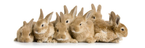 Groupe de lapins Photos libres de droits