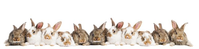 Groupe de lapins dans une ligne Photo libre de droits