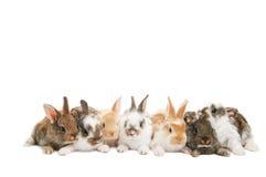 Groupe de lapins dans une ligne Photo stock