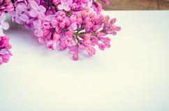 Groupe de lilas avec la page de papier blanc photo libre de droits