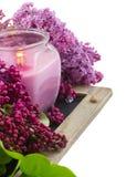Groupe de lilas dans la fin de pot  Image stock