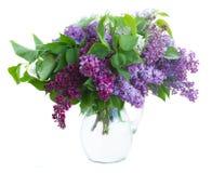 Groupe de lilas dans le pot Photos libres de droits