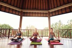 Groupe de méditer femelle dans la pose de lotus dans la classe de yoga Photo libre de droits