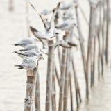Groupe de mouettes retenant en fonction le bambou Image libre de droits