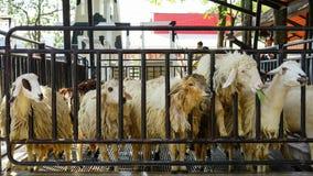 Groupe de moutons mangeant l'herbe avec le troupeau à une ferme Photo stock