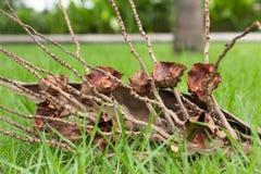 Groupe de noix de coco Photos libres de droits