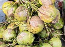 Groupe de noix de coco de l'eau Photographie stock libre de droits