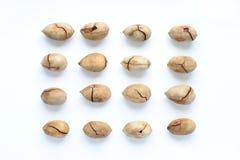 Groupe de noix de pécan Photographie stock