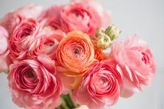 Groupe de pâle - fond persan de lumière de renoncule de ranunculus rose, surface en bois blanc de vase d'isolement par glace photo libre de droits
