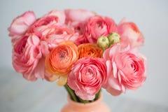 Groupe de pâle - fond persan de lumière de renoncule de ranunculus rose, surface en bois blanc de vase d'isolement par glace image stock