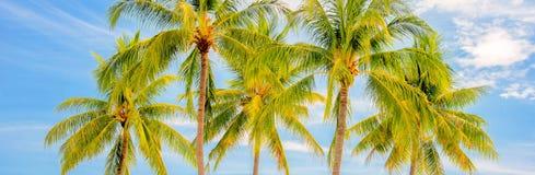 Groupe de palmiers, concept panoramique de voyage d'été image libre de droits